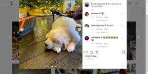 KUWTK Kourtney Kardashian Puppy Instagram Screenshot