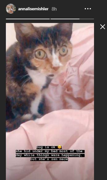Bachelor Annalise Mishler cat
