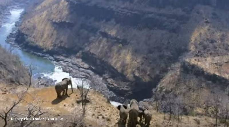 Meghan markle narrates Elephant