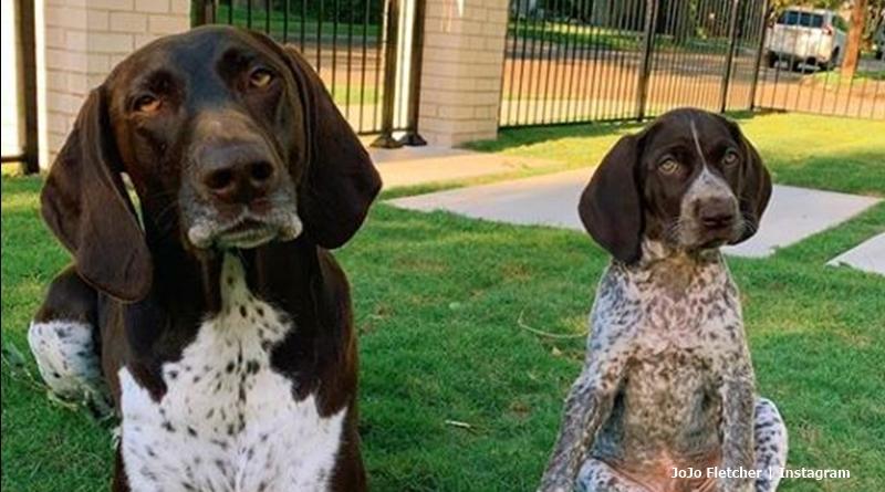 The bachelorette JoJo Fletcher new dog Jagger