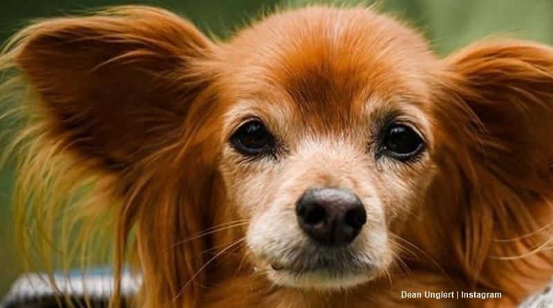 BiP Dean Unglert Dog pappy
