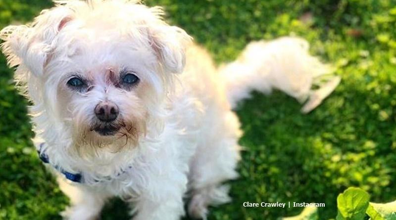 Bachelorette Clare Crawley dog