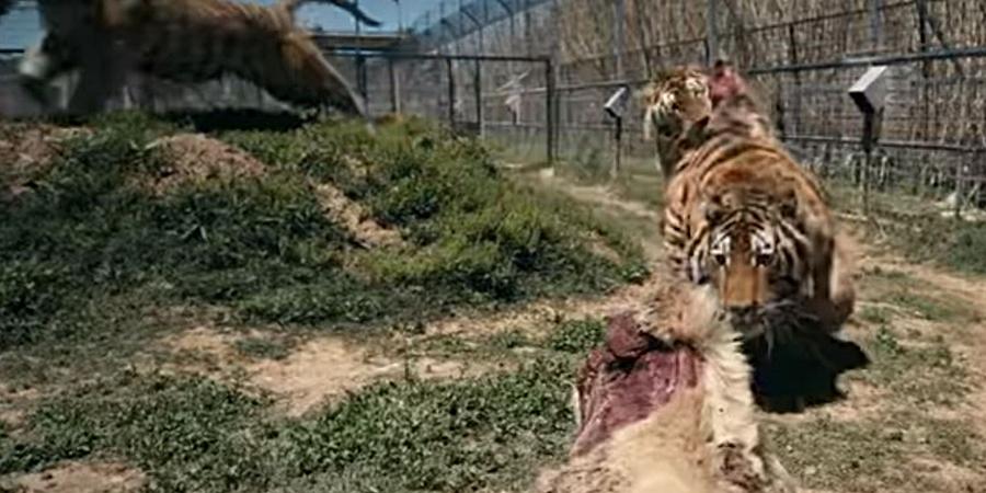Carole Baskin Zoo Trashed