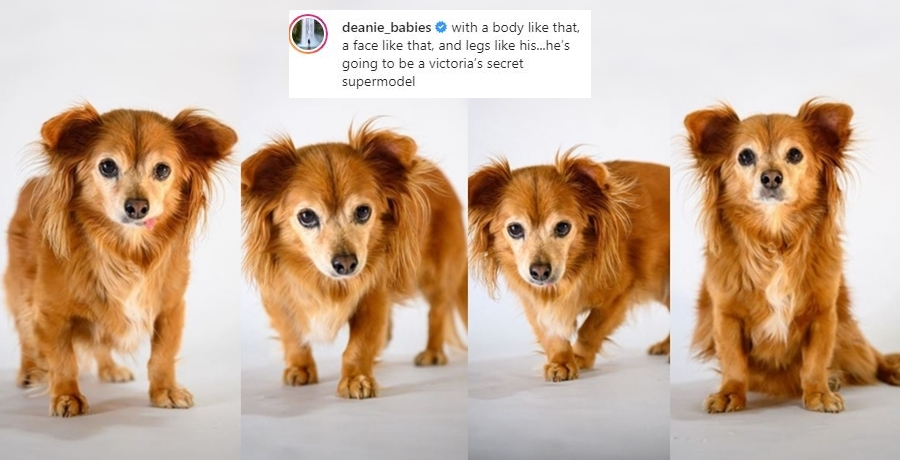 Dean Unglert's Dog Pappy 'Victoria's Secret Supermodel' - See Pics