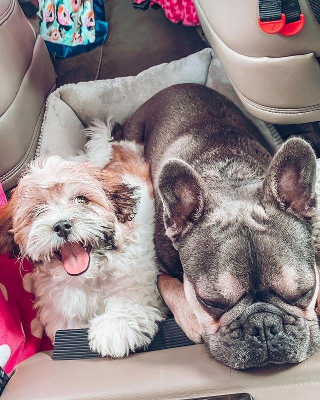 TLC star Busby's dogs via Instagram